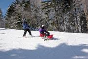 Woman-learning-to-sit-ski-at-an-alpine-ski-field